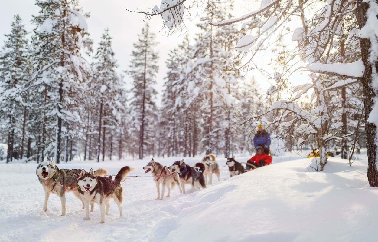 Lapland Husky Ride Wanderlust Trips Northern Lights Trip