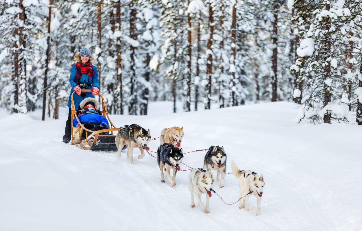 Husky Ride Lapland Trip Wanderlust Trips Northern Lights Trip